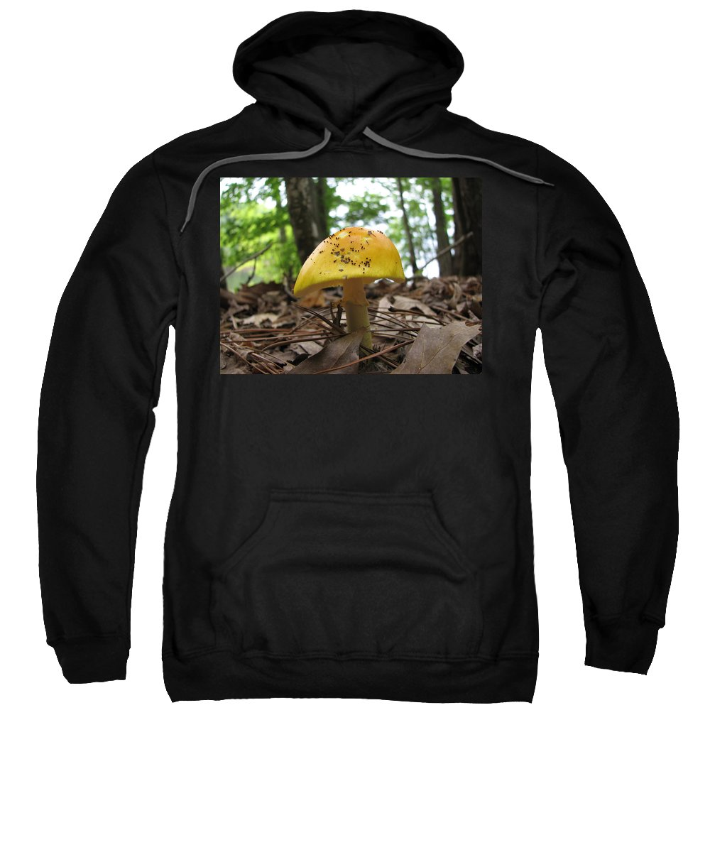 Toad Stool Sweatshirt featuring the photograph Toad Stool by Stacey May