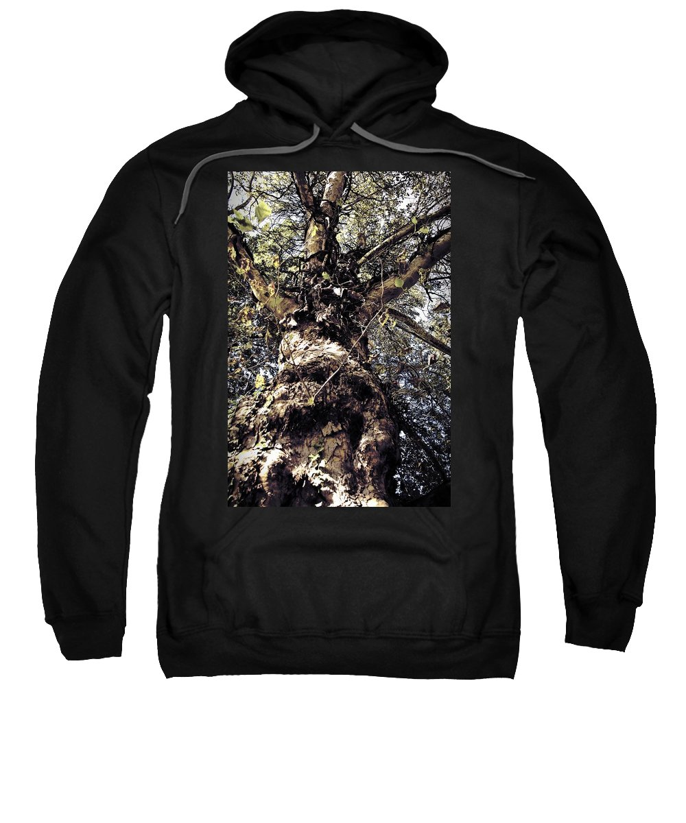 Tree. Forest. Leaf Sweatshirt featuring the photograph Topiary by Scott Wyatt