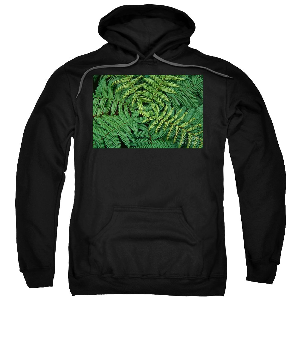 Above Sweatshirt featuring the photograph Tree Fern Fronds by Greg Vaughn - Printscapes