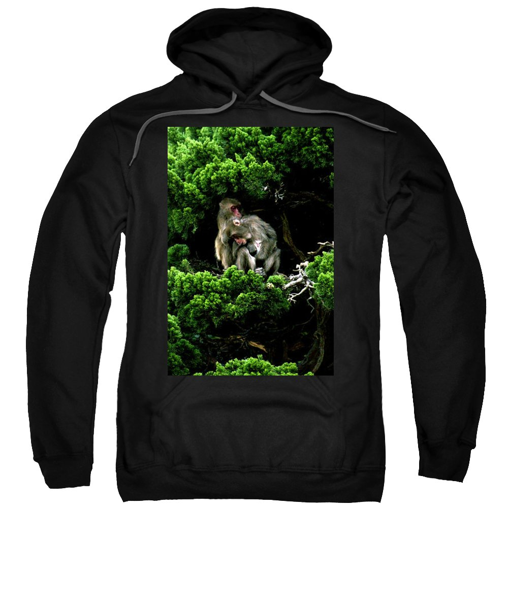 Trees Sweatshirt featuring the photograph Trees In Japan 10 by George Cabig