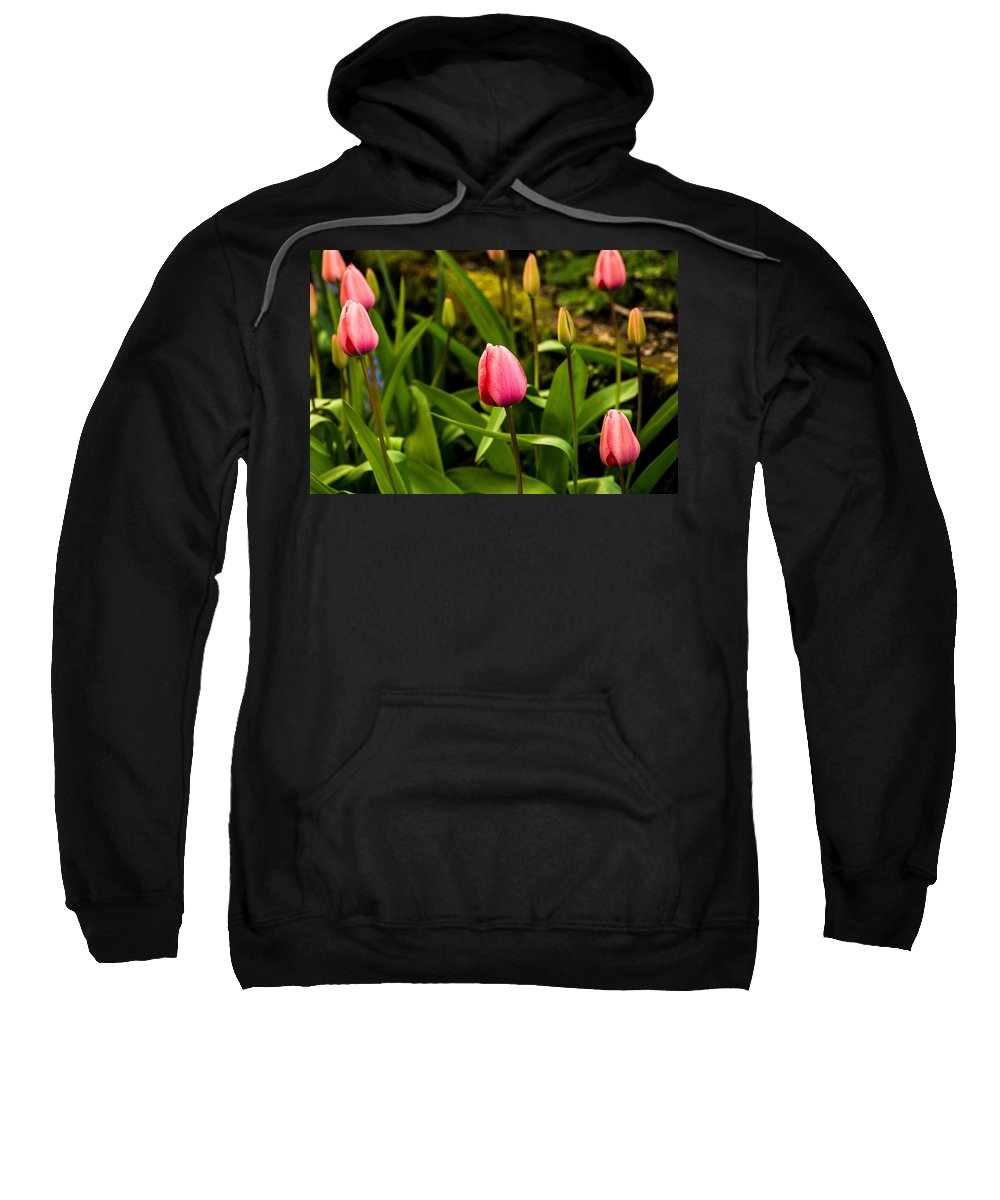 Flowers Sweatshirt featuring the photograph Tulip Garden by Teresa Herlinger