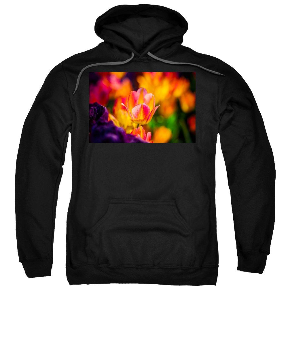 Tulip Sweatshirt featuring the photograph Tulips Enchanting 15 by Alexander Senin