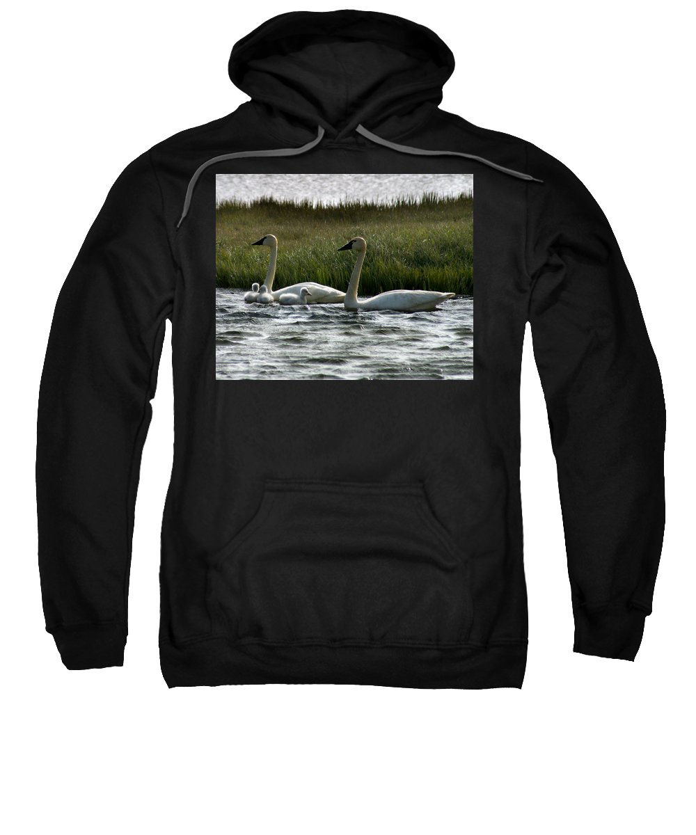 Swans Sweatshirt featuring the photograph Tundra Swans And Cygents by Anthony Jones