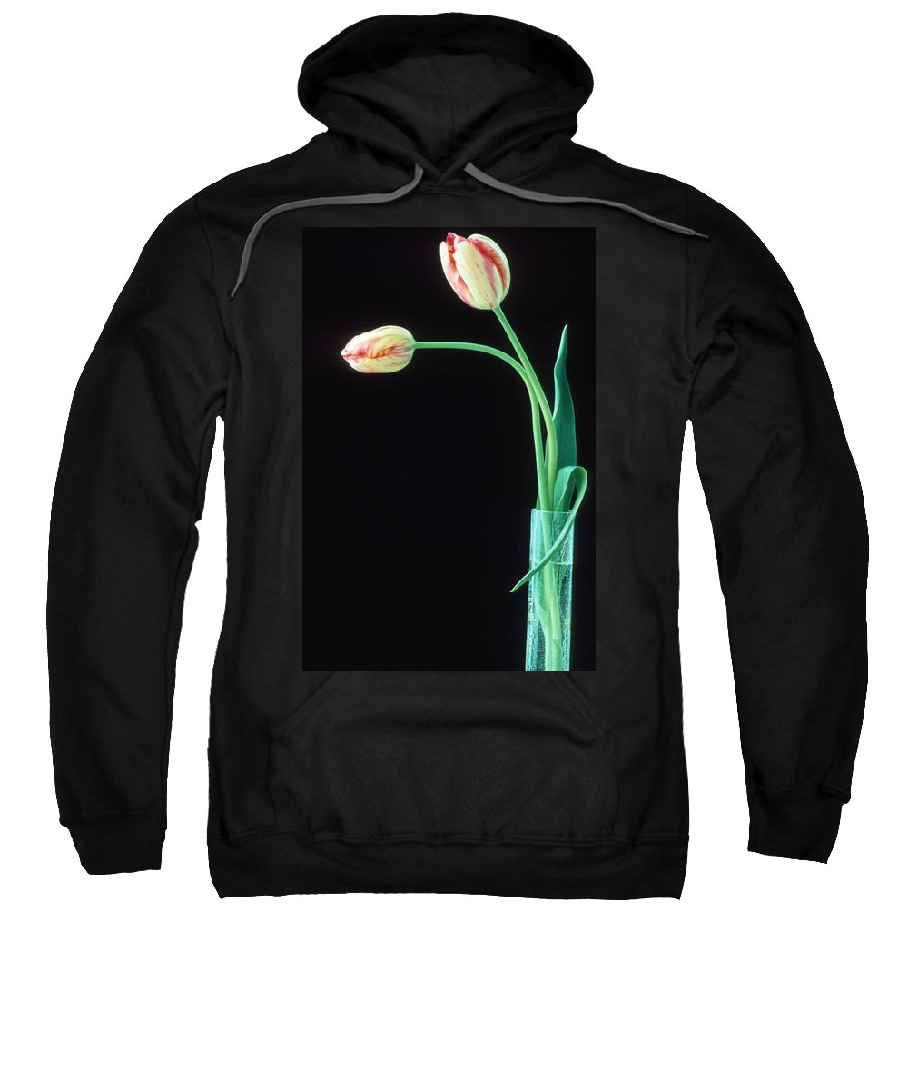 French Tulip Sweatshirt featuring the photograph Two French Tulips by Laurie Paci
