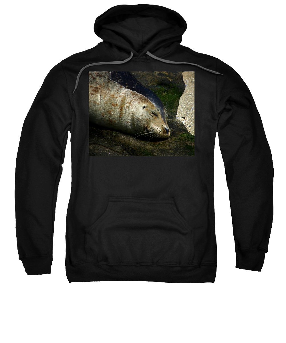 Seal Sweatshirt featuring the photograph Two Tone Seal by Anthony Jones