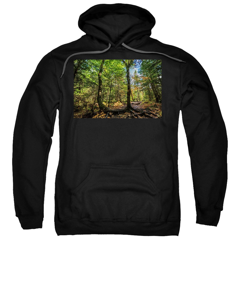 Cascade Sweatshirt featuring the photograph U Shaped Trees Cascade Mountain Ny New York by Toby McGuire