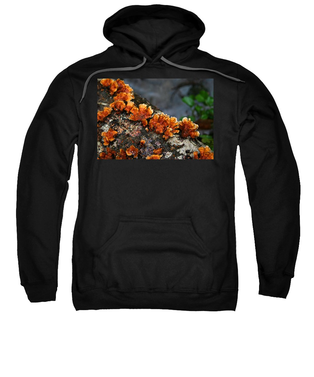 Bright Orange Nature Wet Forest Fungus Tree Wood Closeup Macro Sweatshirt featuring the photograph Unexpected Brightness by Andrei Shliakhau