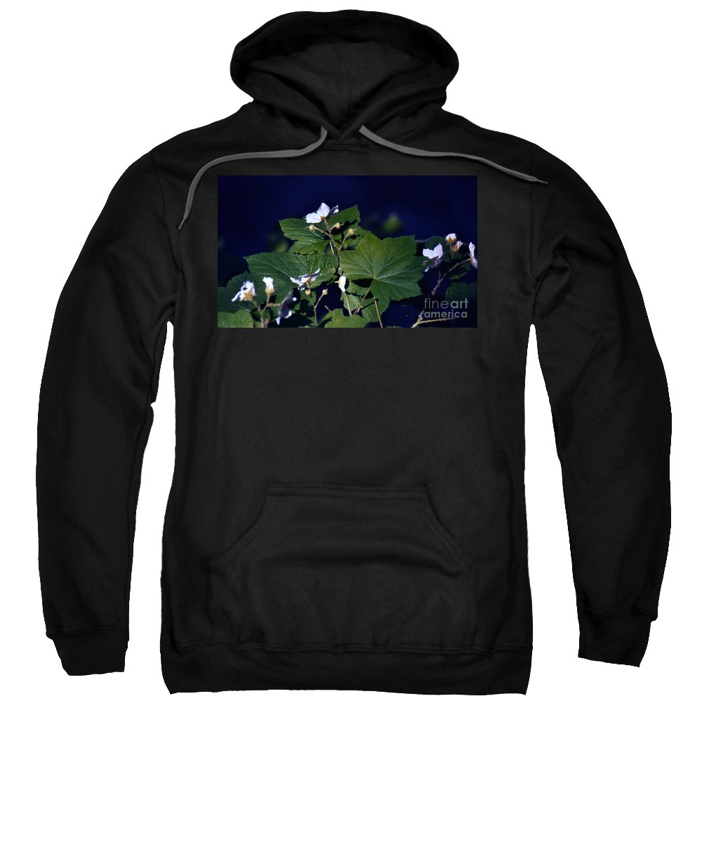 Leaves Sweatshirt featuring the photograph Untitled 01 by Peter Piatt