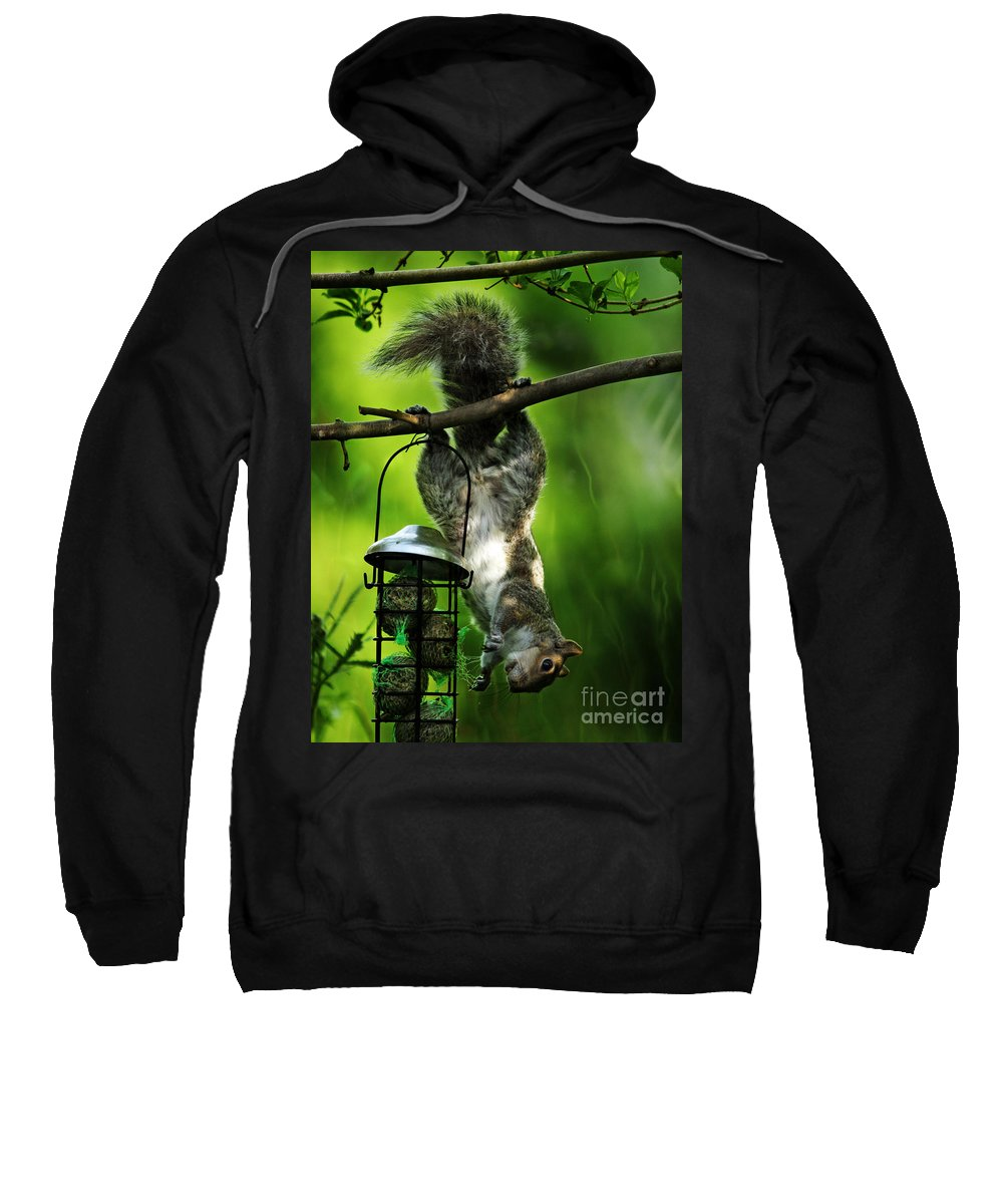 Squirrel Sweatshirt featuring the photograph Upside Down by Angel Ciesniarska