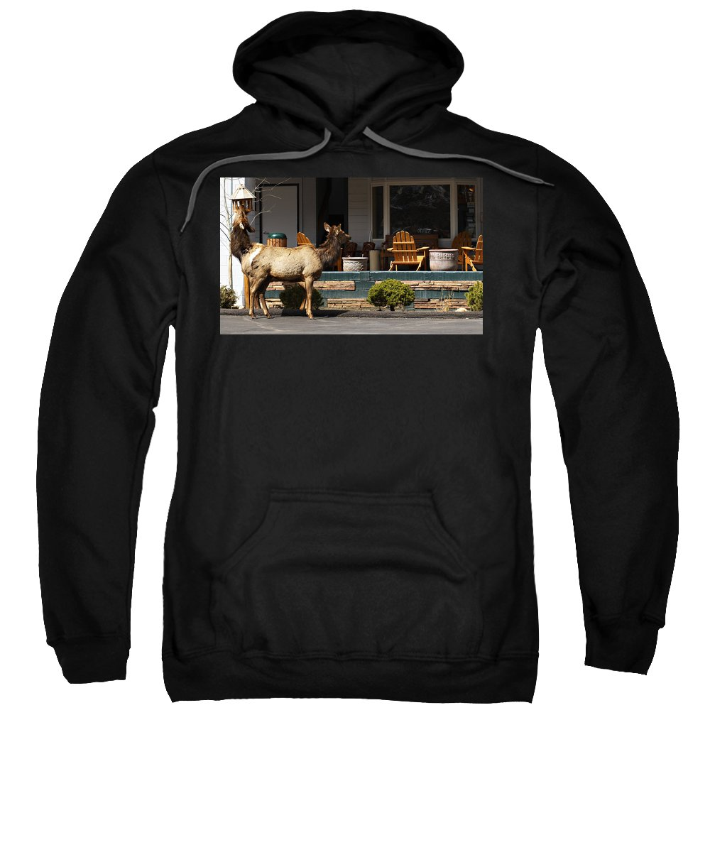 Elk Sweatshirt featuring the photograph Urban Elk by Marilyn Hunt