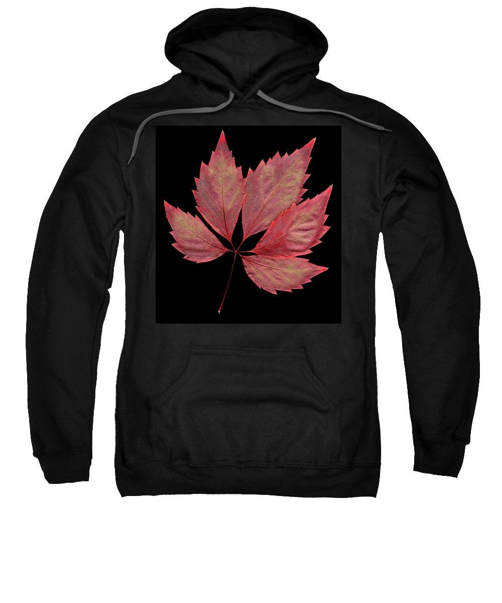 Leaf Sweatshirt featuring the photograph Vine Leaf by Stefania Levi