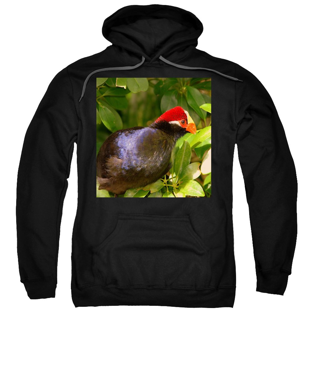 Violet Plantain Eater Sweatshirt featuring the photograph Violet Plantain Eater by Susanne Van Hulst