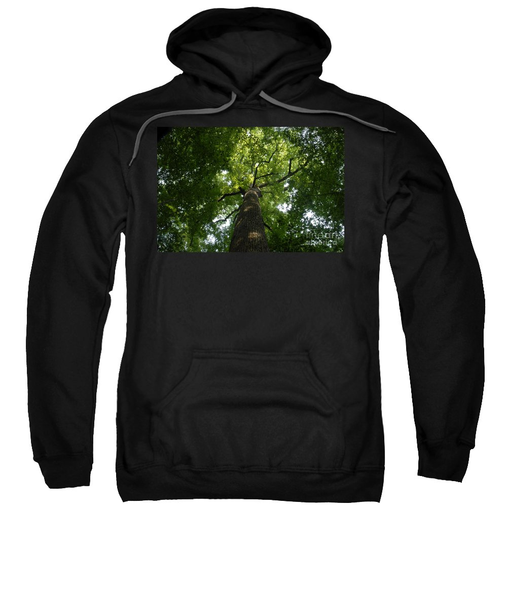 Joyce Kilmer Memorial Forest Sweatshirt featuring the photograph Virgin Canopy by David Lee Thompson