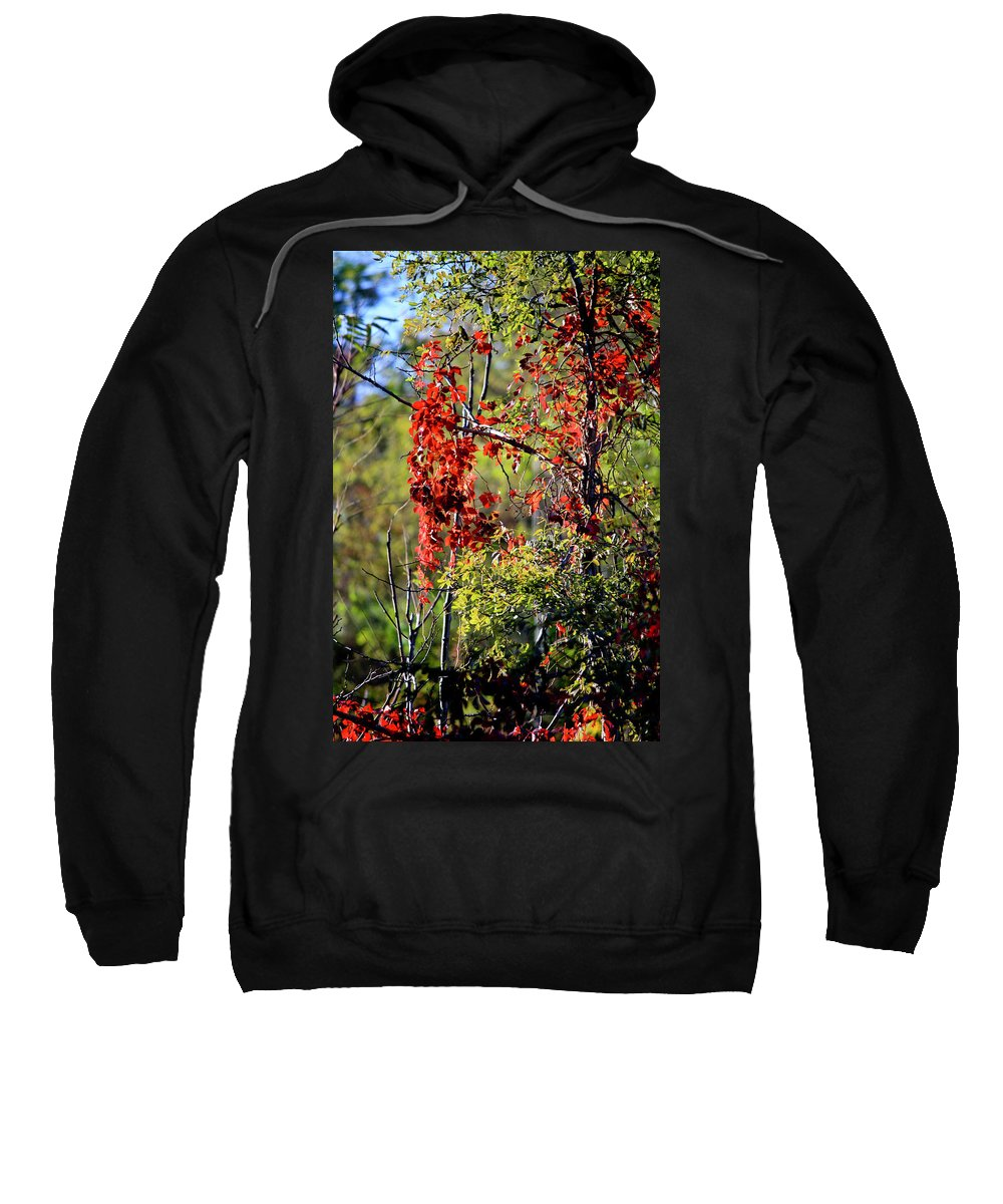 Virginia Sweatshirt featuring the photograph Virginia Creeper by Teresa Mucha