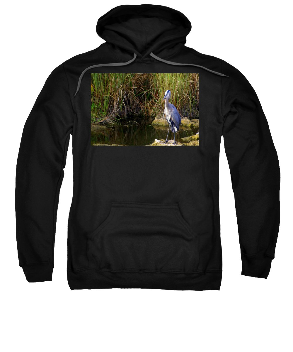 Bird Sweatshirt featuring the photograph Waiting by Marty Koch