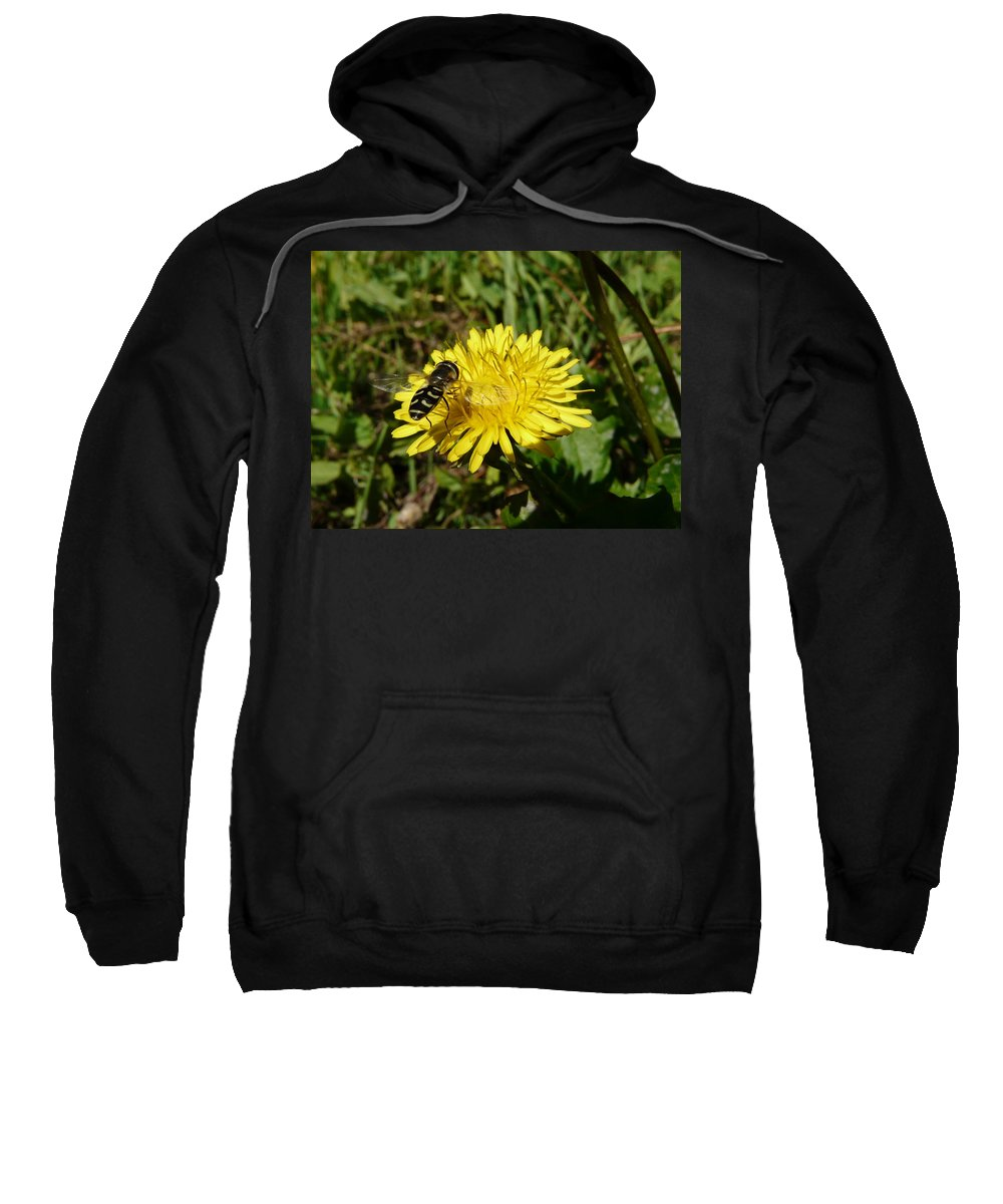 Wasp Sweatshirt featuring the photograph Wasp Visiting Dandelion by Valerie Ornstein