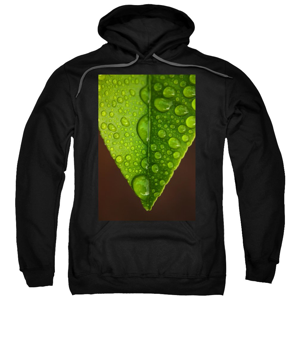 Leaf Sweatshirt featuring the photograph Water Droplets On Lemon Leaf by Ralph A Ledergerber-Photography