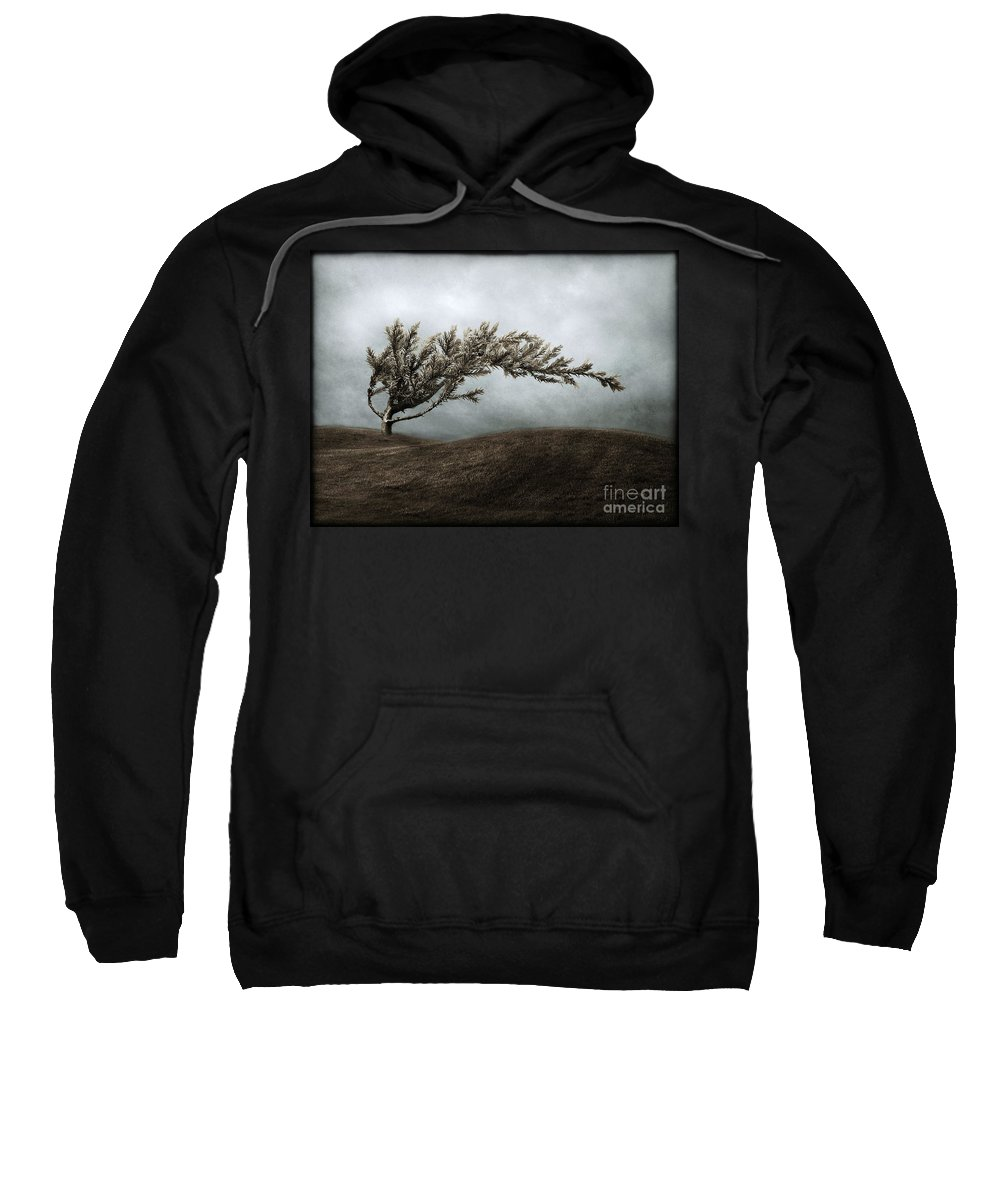 Bend Sweatshirt featuring the photograph We Break And We Bend And We Turn Ourselves Inside Out by Dana DiPasquale