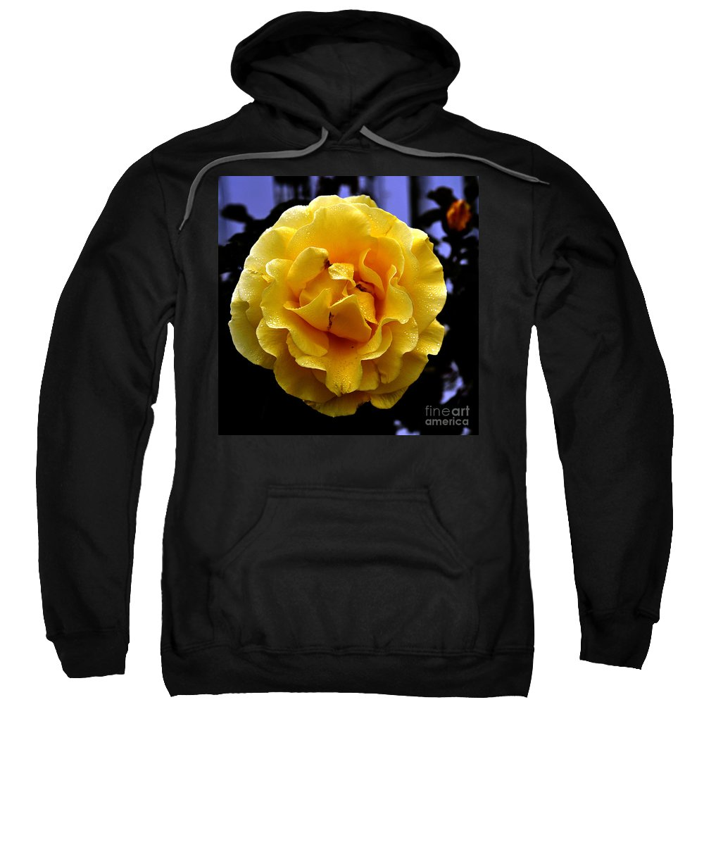 Clay Sweatshirt featuring the photograph Wet Yellow Rose by Clayton Bruster