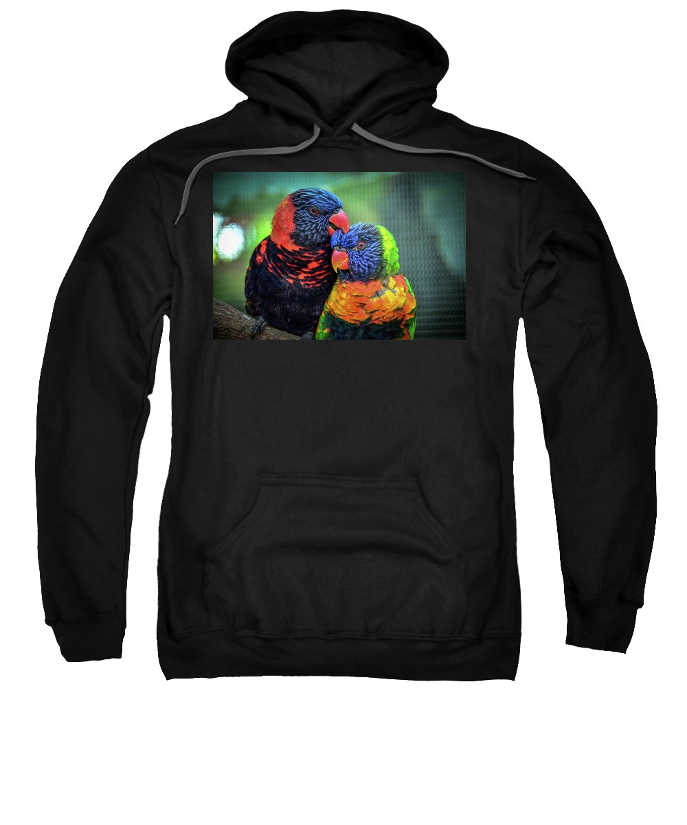 Birds Sweatshirt featuring the photograph What Are Friends For? by Robert Coffey
