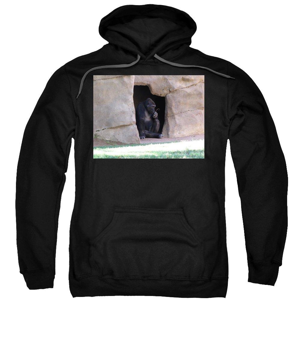 Gorilla Sweatshirt featuring the photograph What To Do by Sarojinie De Silva