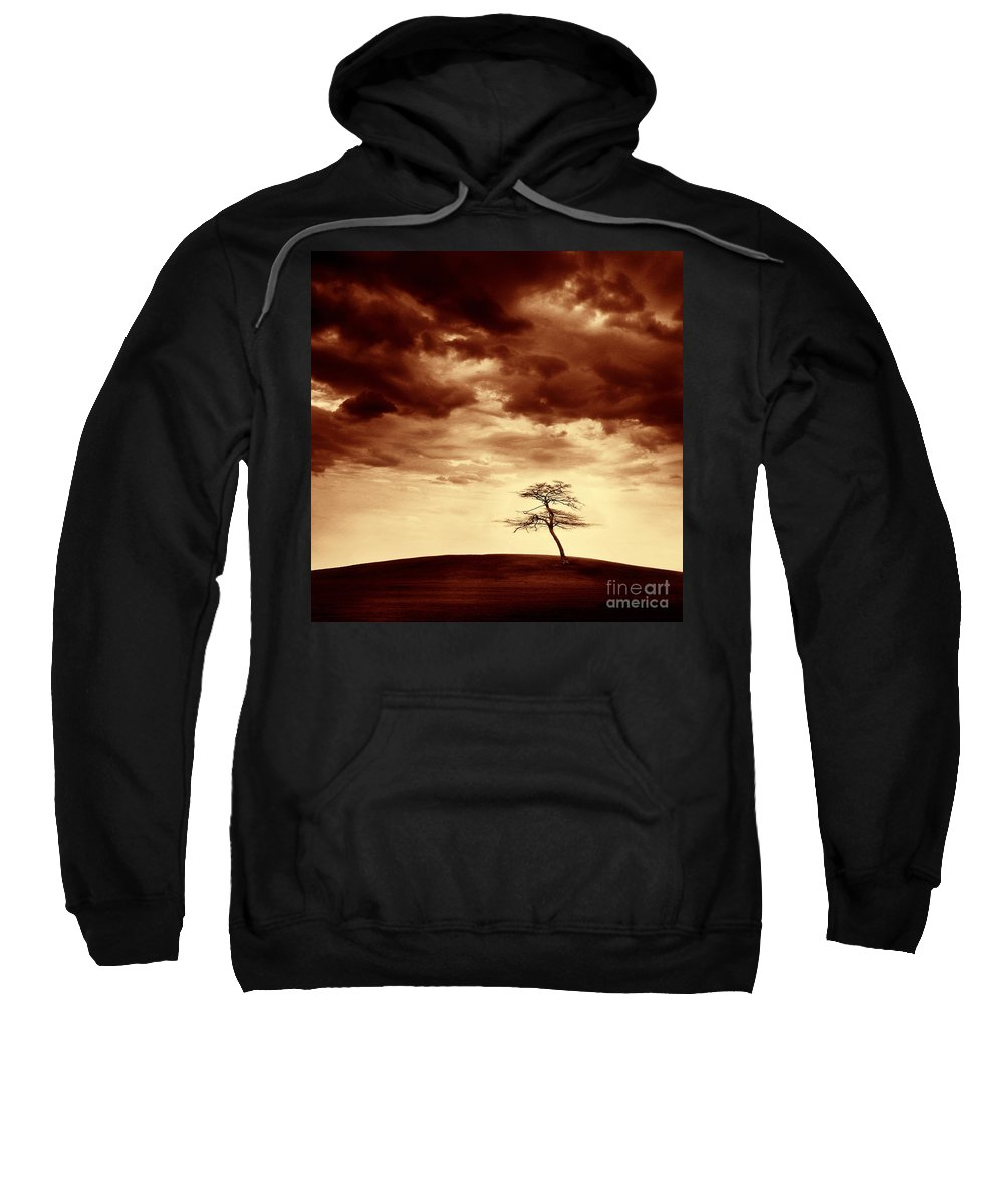 Tree Sweatshirt featuring the photograph What Will Be The Legacy by Dana DiPasquale