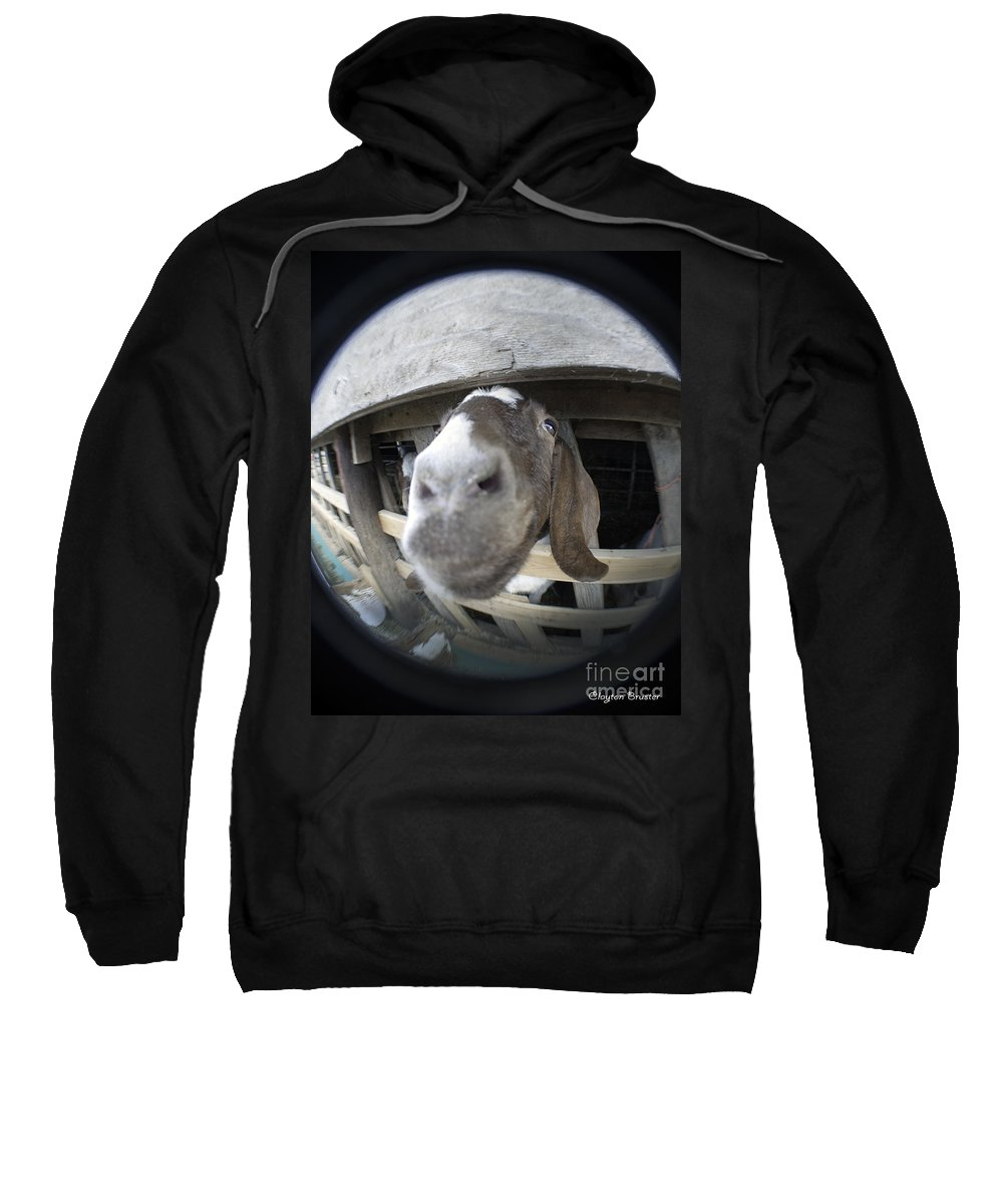 Art Sweatshirt featuring the photograph Where Is Eyore by Clayton Bruster