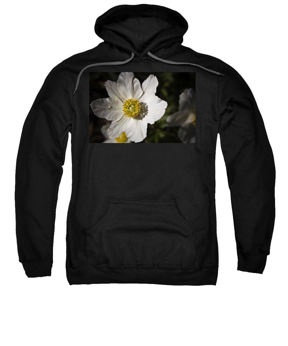 Flower Sweatshirt featuring the photograph White Anemone by Teresa Mucha