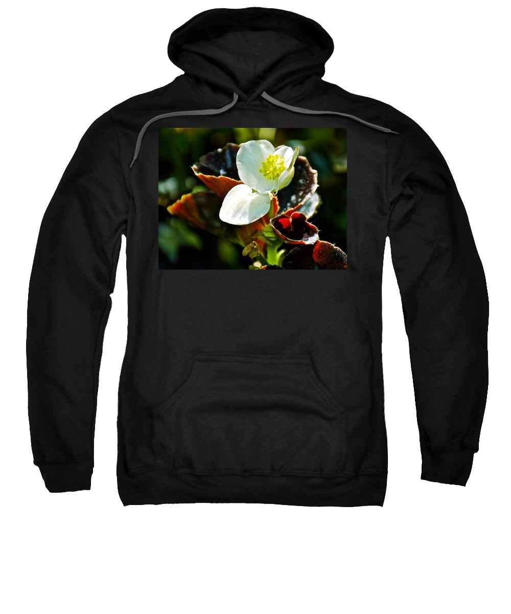 White Begonia At Pilgrim Place In Claremont Sweatshirt featuring the photograph White Begonia At Pilgrim Place In Claremont-california by Ruth Hager