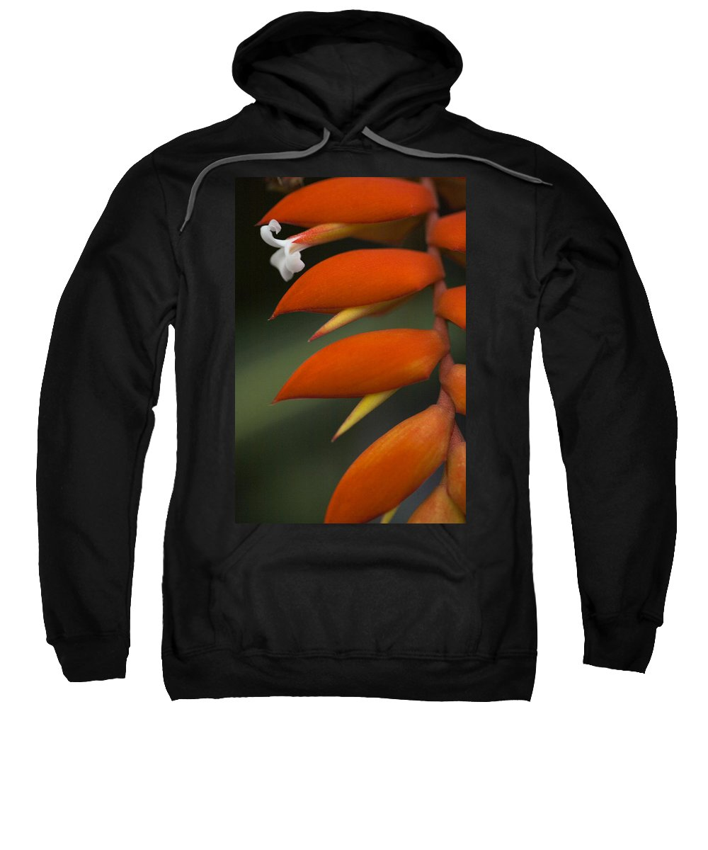 Heliconia Sweatshirt featuring the photograph White Flower And Orange by Karen Ulvestad