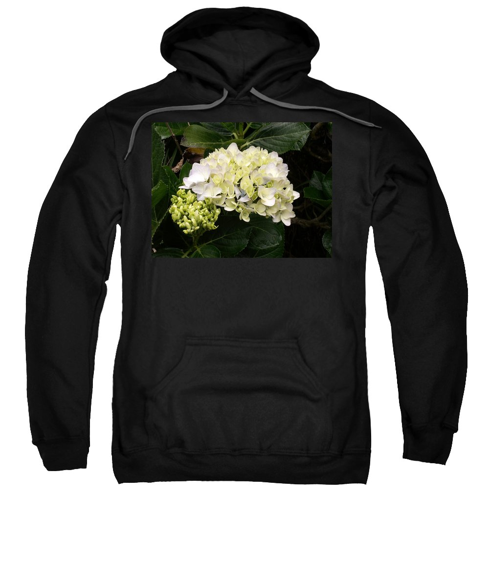 Flower Sweatshirt featuring the photograph White Hydrangeas by Amy Fose