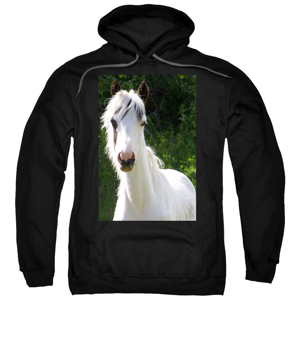 Curious Sweatshirt featuring the photograph White Indian Pony by Greg Hammond