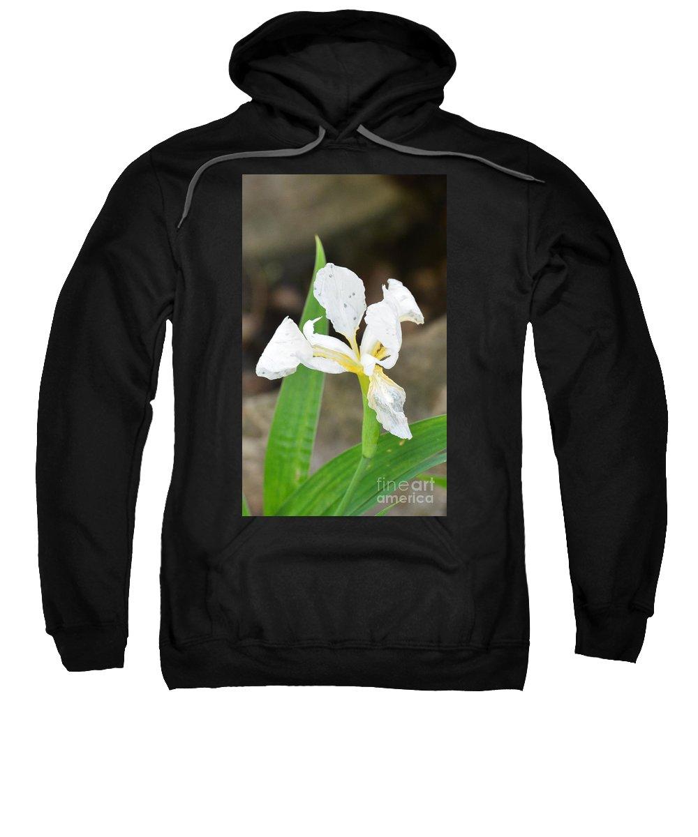 White Iris Sweatshirt featuring the photograph White Iris by Maria Urso