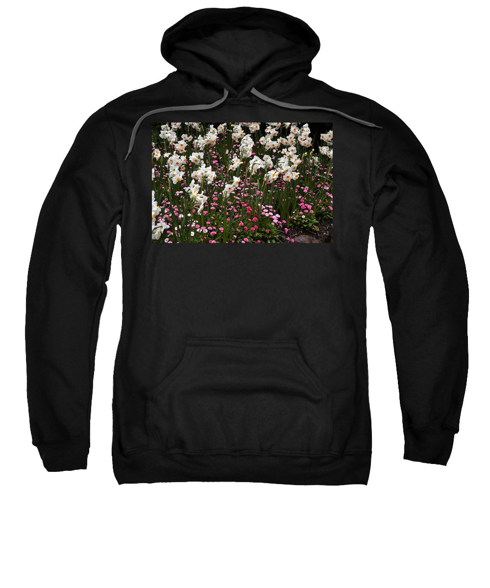 Flower Sweatshirt featuring the photograph White Narcissus With Pink English Daisies In A Spring Garden by Louise Heusinkveld