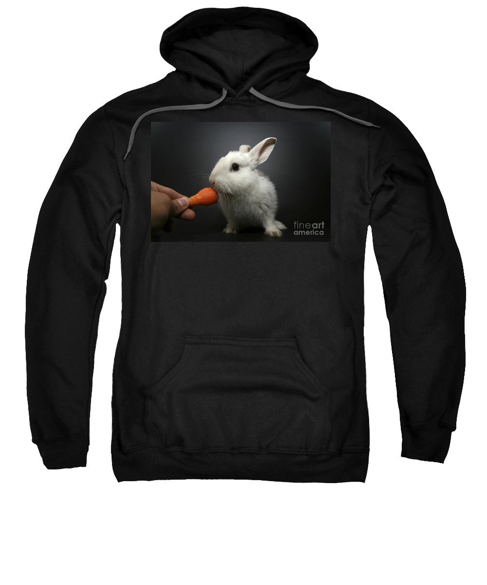 White Sweatshirt featuring the photograph White Rabbit by Yedidya yos mizrachi