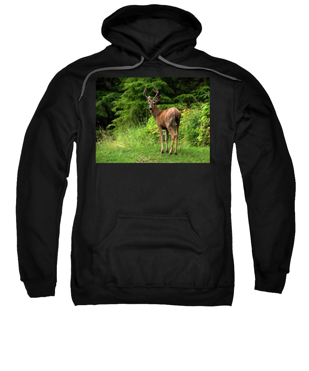 Deer Sweatshirt featuring the photograph White Tailed Buck by Inge Riis McDonald