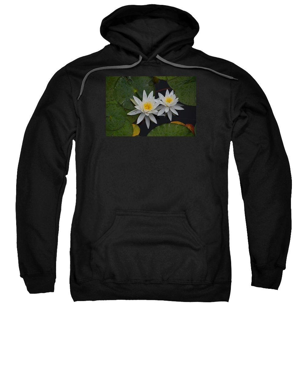 Lily Pad Sweatshirt featuring the photograph White Water Lilies by Whispering Peaks Photography