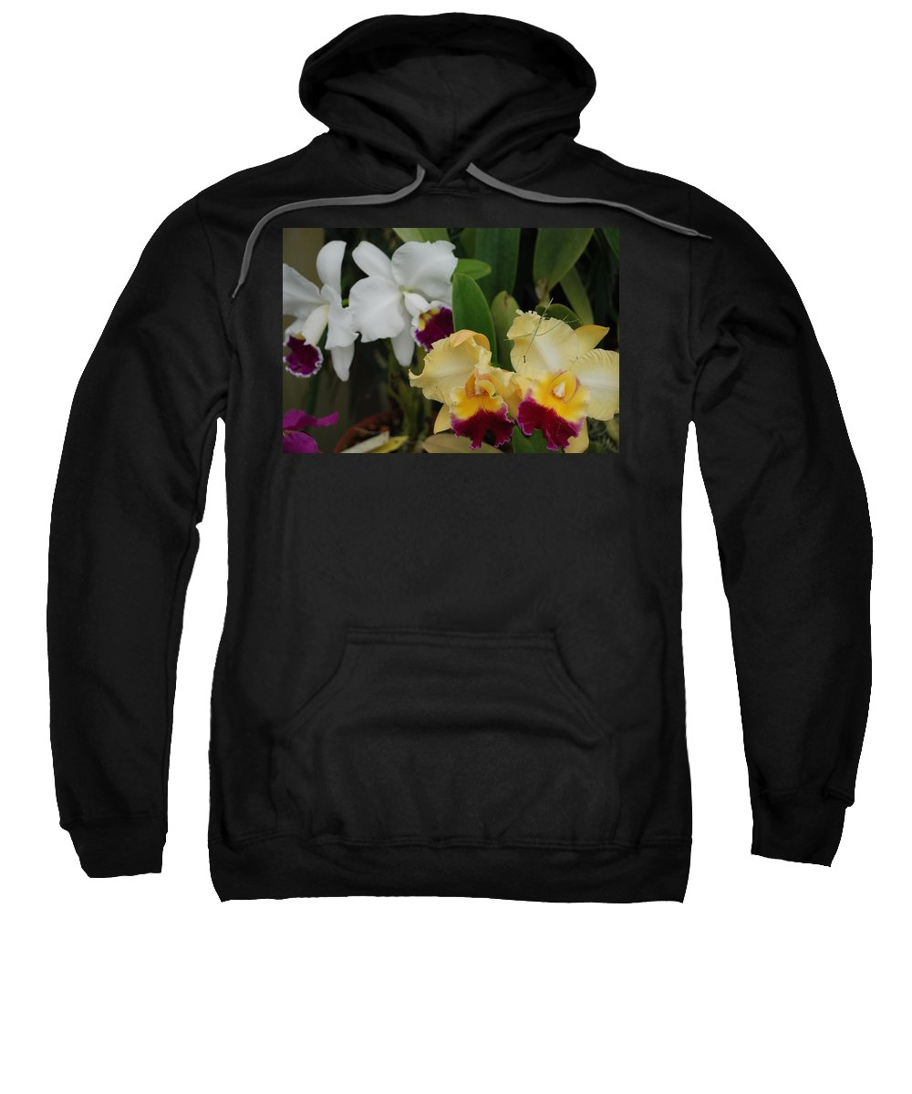 Macro Sweatshirt featuring the photograph White Yellow Orchids by Rob Hans