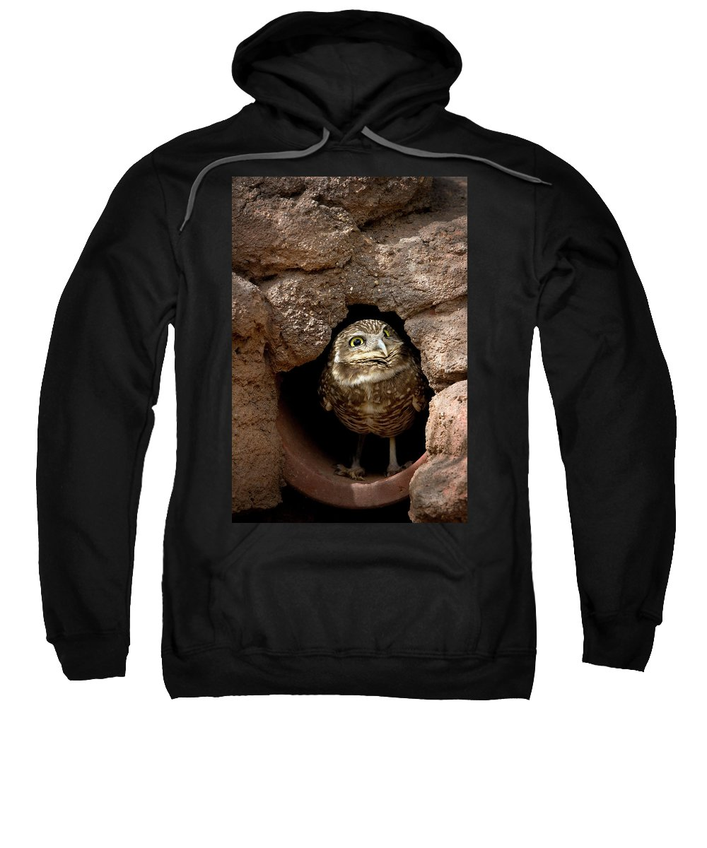 Owl Sweatshirt featuring the photograph Who's There by Phyllis Denton
