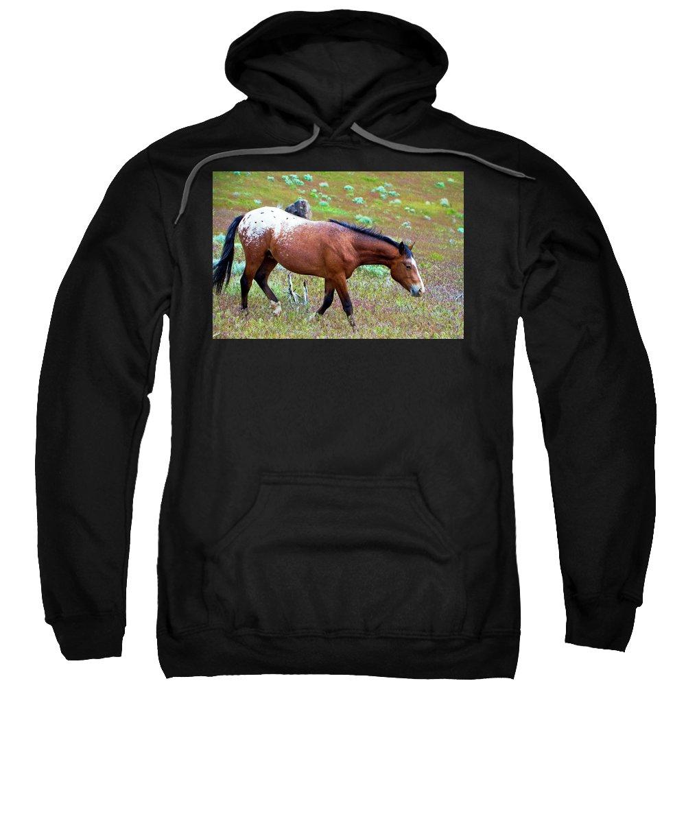 Horse Sweatshirt featuring the photograph Wild Appaloosa Stallion by Waterdancer