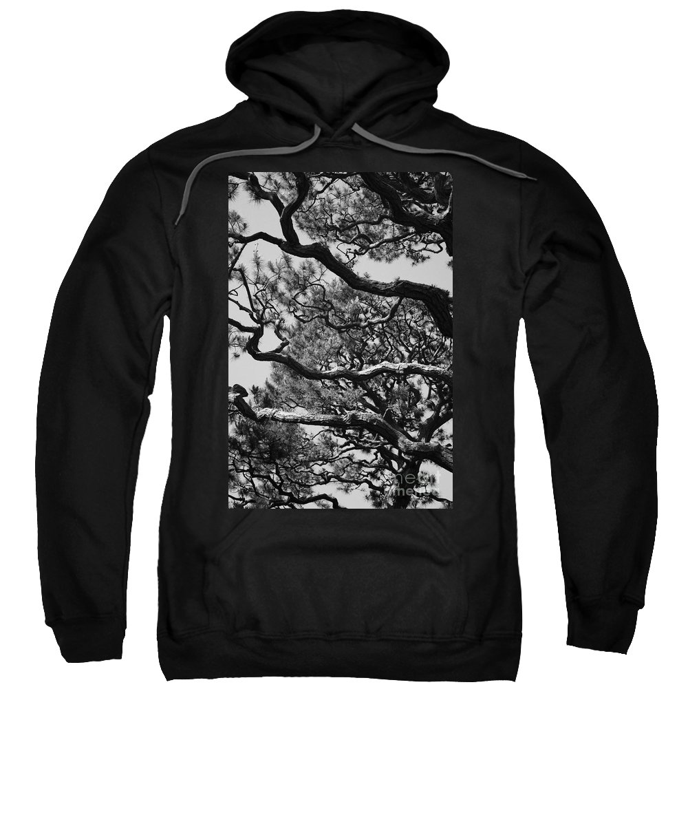Wild Branches Sweatshirt featuring the photograph Wild Branches by Carol Groenen