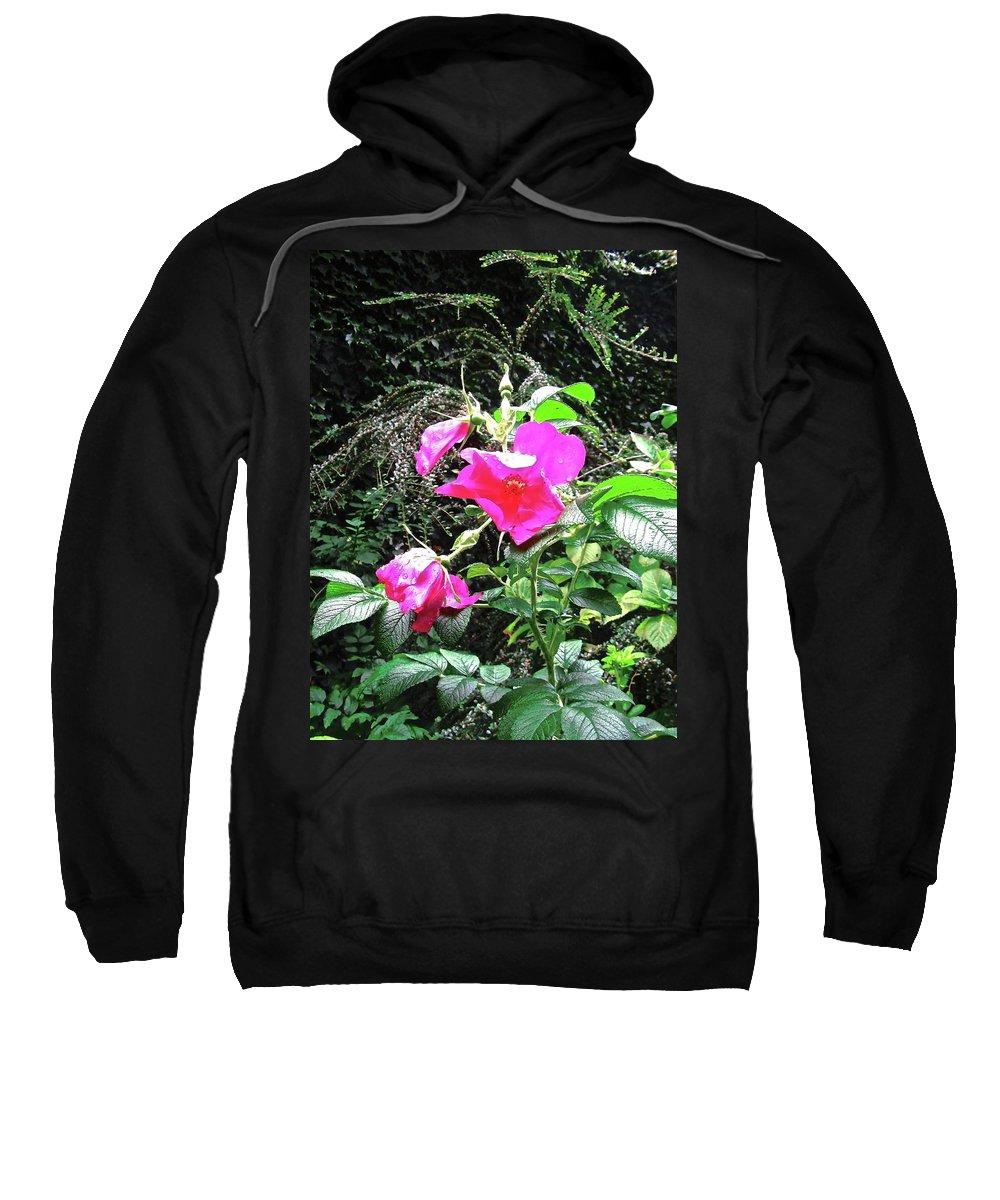 Rose Sweatshirt featuring the photograph Wild Irish Rose by Stephanie Moore
