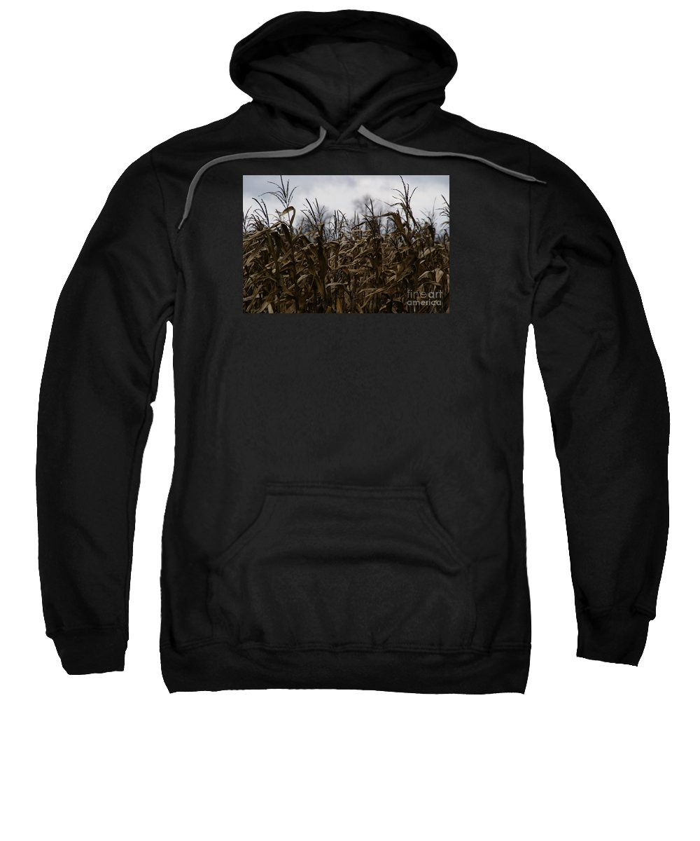 Corn Sweatshirt featuring the photograph Wind Blown by Linda Shafer