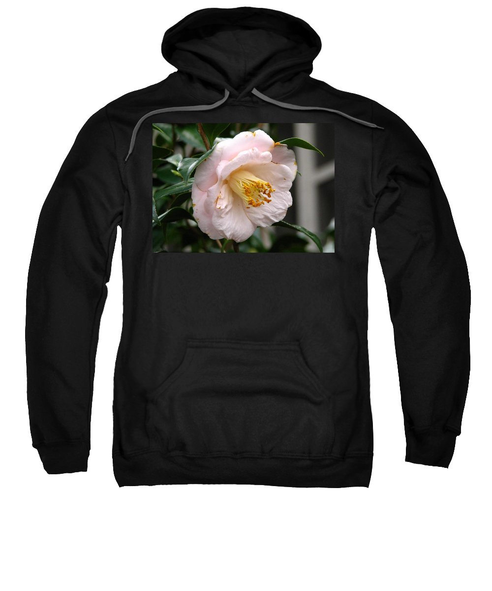 Camellia Sweatshirt featuring the photograph Winter Bloom by J M Farris Photography