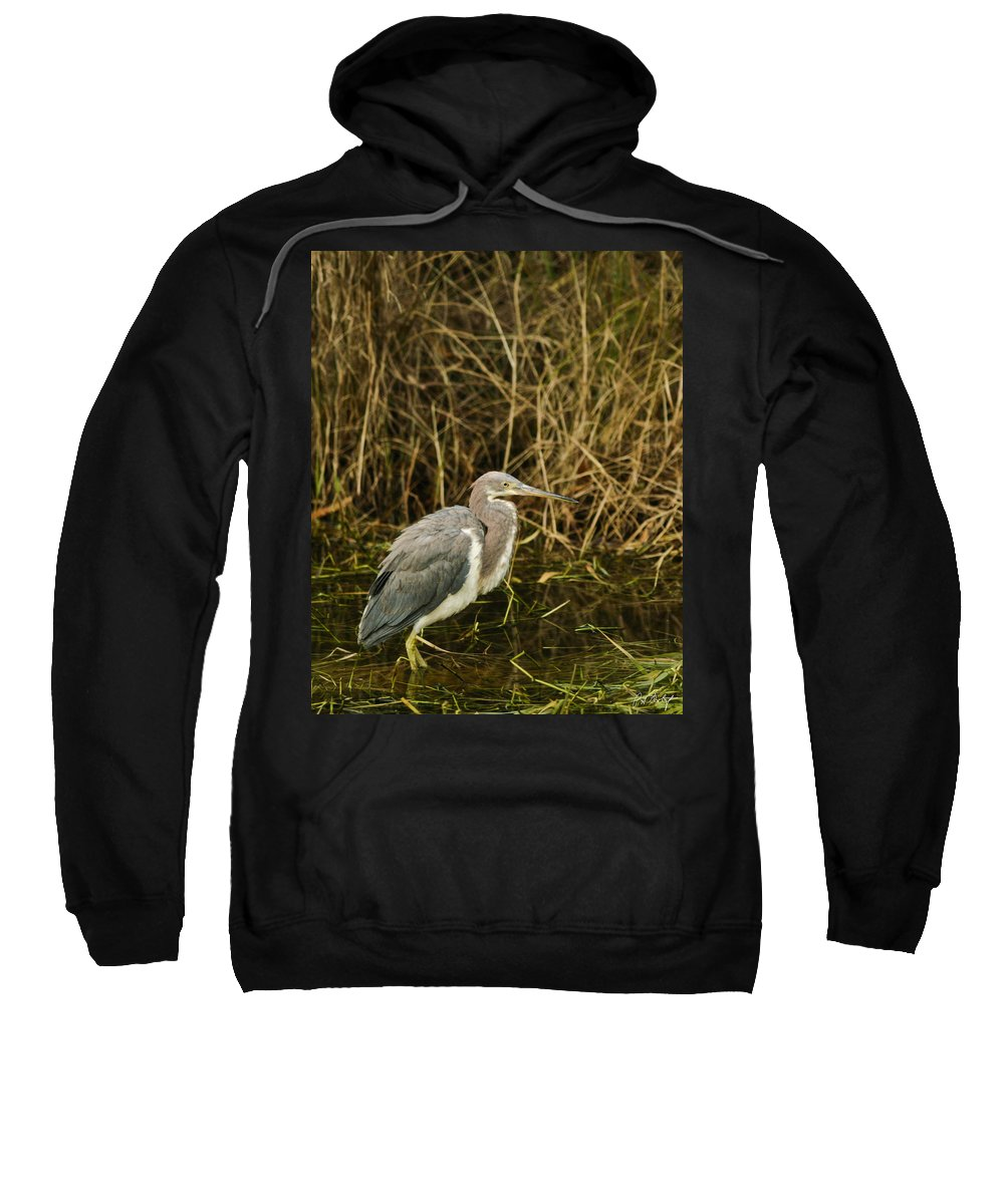 Bird Sweatshirt featuring the photograph Winter Coat by Phill Doherty