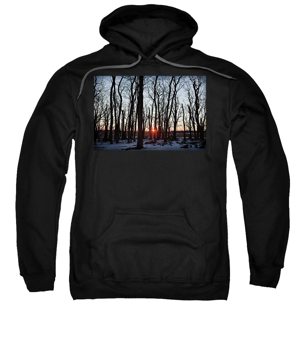 Tree Sweatshirt featuring the photograph Winter Trees by Steve Gadomski