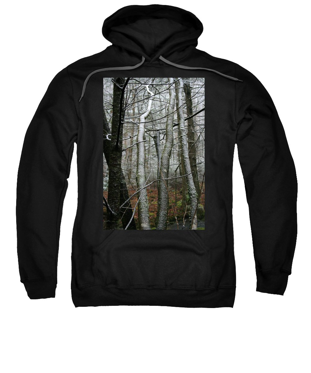 Tree Woods Forest Wood Snow White Green Winter Season Nature Cold Sweatshirt featuring the photograph Wintery Day by Andrei Shliakhau