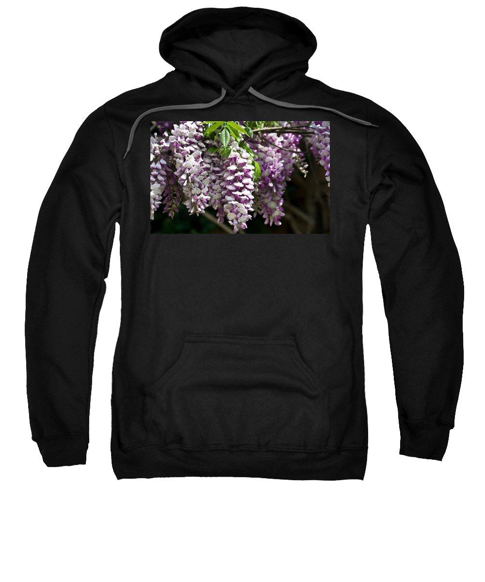 Wisteria Sweatshirt featuring the photograph Wisteria by Teresa Mucha