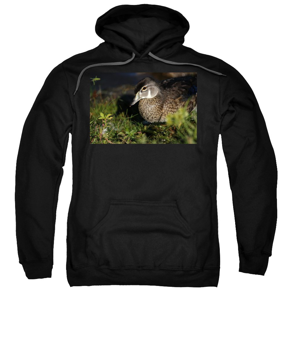 Wood Duck Sweatshirt featuring the photograph Wood Duck Female by Karol Livote