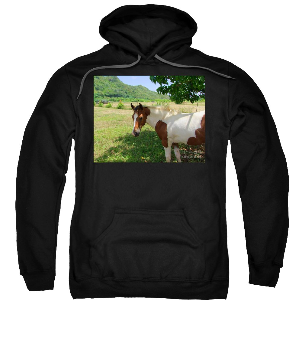 Horse Sweatshirt featuring the photograph Yearling Colt In The Pasture by Mary Deal